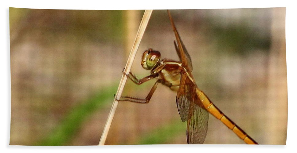 Dragonfly Bath Towel featuring the photograph Dragonfly Looking At You by Laurel Talabere