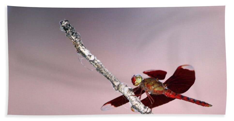 Dragonfly Bath Sheet featuring the photograph Dragonfly On A Pastel Sky by Nola Lee Kelsey