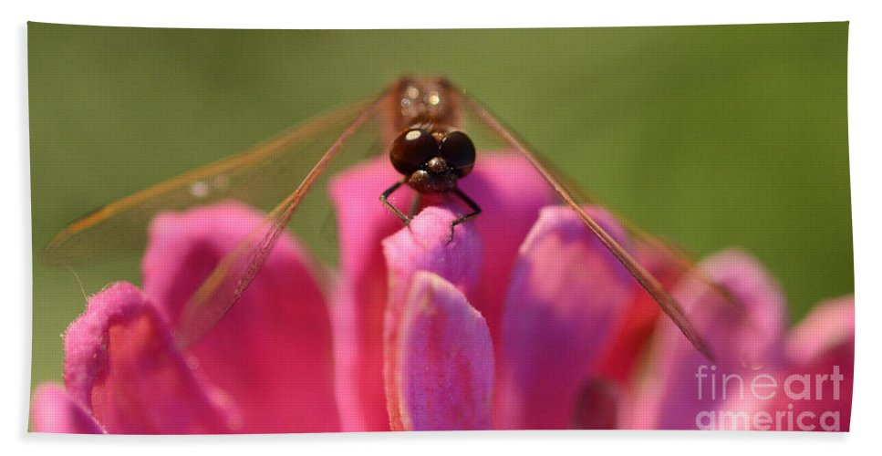 Dragonfly Hand Towel featuring the photograph Dragonfly On Pink Flower by Bob Christopher