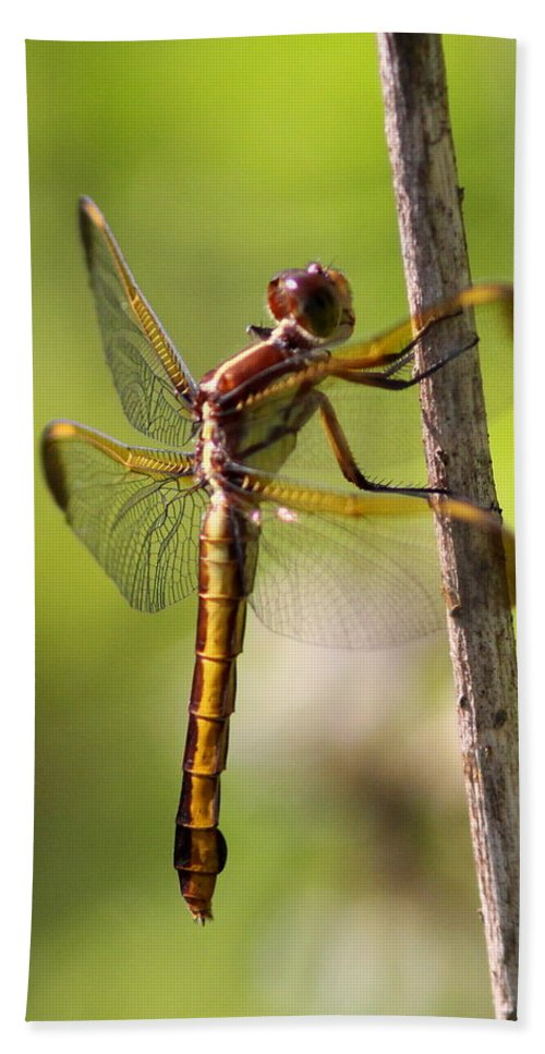 Dragonfly Hand Towel featuring the photograph Dragonfly Photo - Yellow Dragon by Travis Truelove