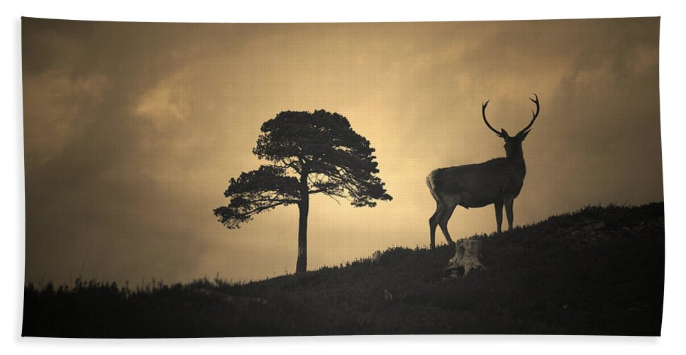 Red Deer Silhouette Hand Towel featuring the photograph Dreaming Of Tomorrow by Gavin Macrae