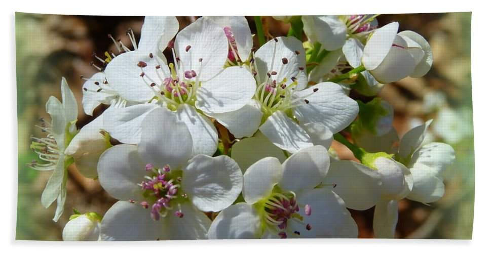 Flowers Bath Sheet featuring the photograph Dreams Of Pear Blossoms by Carla Parris