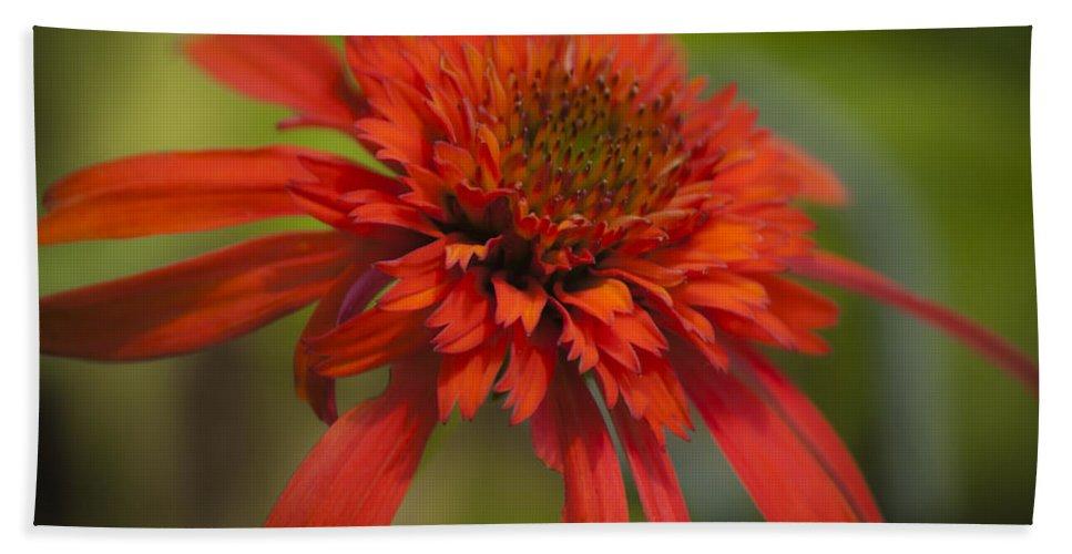 Coneflower Bath Sheet featuring the photograph Dreamy Hot Papaya Coneflower Bloom by Teresa Mucha