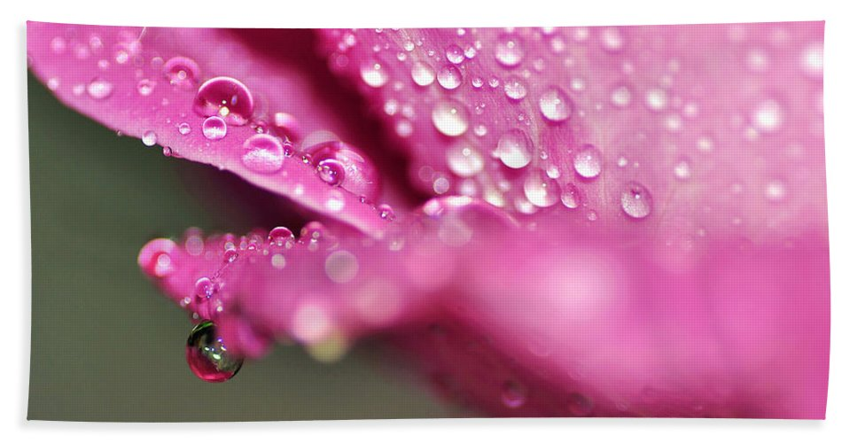 Photography Bath Sheet featuring the photograph Droplet On Rose Petal by Kaye Menner