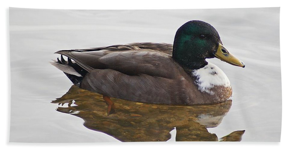 Duck Hand Towel featuring the photograph Duck 3 by Joe Faherty
