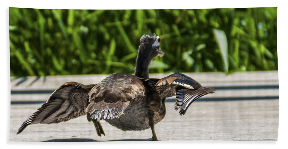 Wildlife Bath Sheet featuring the photograph Duck And Run by Edward Peterson