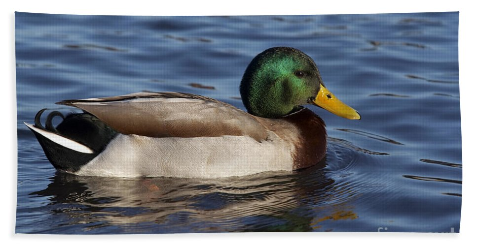 Nature Hand Towel featuring the photograph Duck On The Water by Michal Boubin