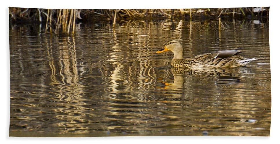 Usa Bath Sheet featuring the photograph Duck Ripples by LeeAnn McLaneGoetz McLaneGoetzStudioLLCcom