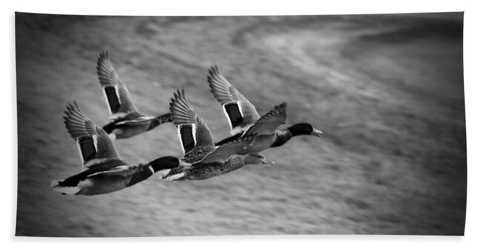 Ducks In Flight Bath Sheet featuring the photograph Ducks In Flight V2 Bw by Douglas Barnard