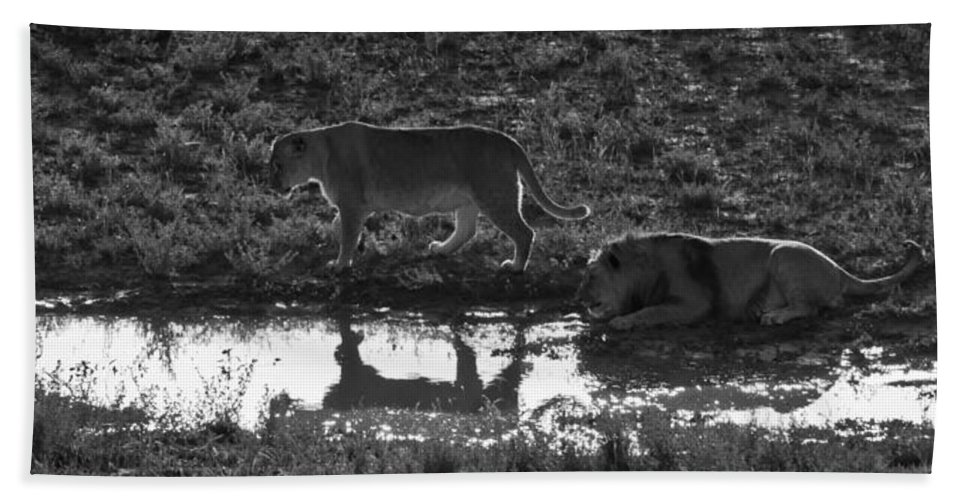 Wild Bath Sheet featuring the photograph Dusk Reflections by Colleen Coccia