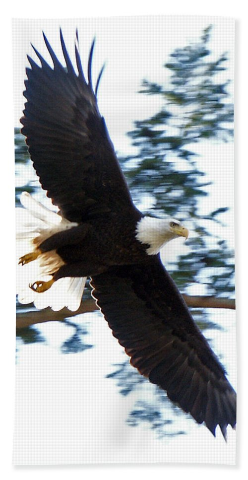 Eagle Bath Sheet featuring the photograph Eagle Eye by David Zinkand