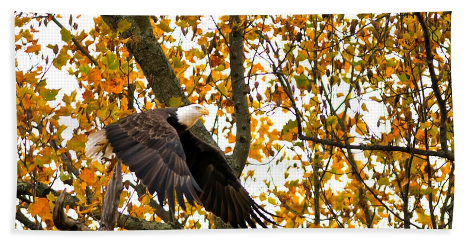 Eagle Hand Towel featuring the photograph Eagle In Autumn by Randall Branham