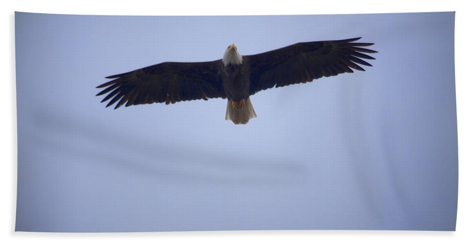 Bald Eagle Hand Towel featuring the photograph Eagle by Karen Ulvestad