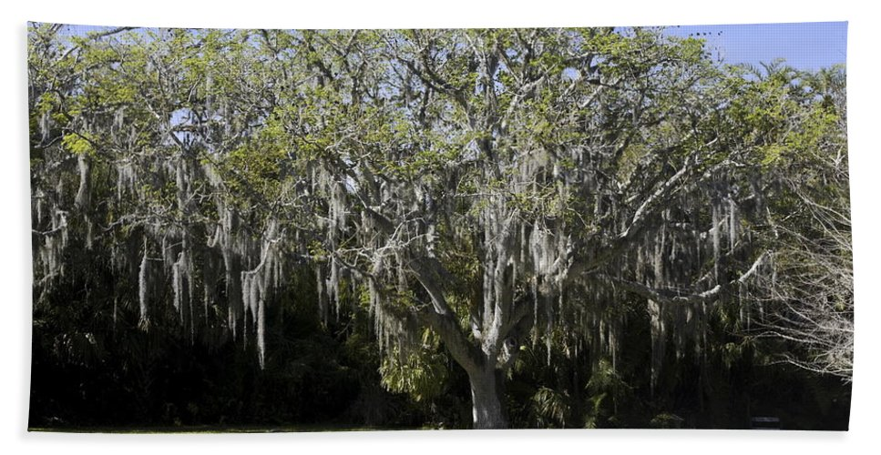 Guanacaste Tree Bath Sheet featuring the photograph Ear Tree by Sally Weigand