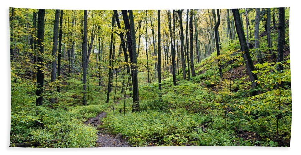 Autumn Hand Towel featuring the photograph Early Autumn Hike by Phill Doherty