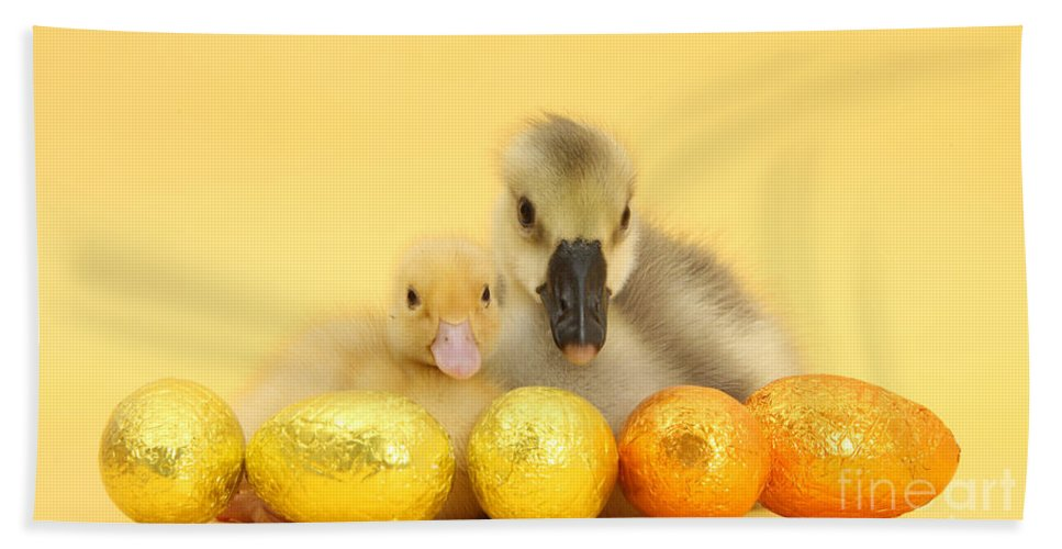 Nature Hand Towel featuring the photograph Easter Duckling And Gosling by Mark Taylor