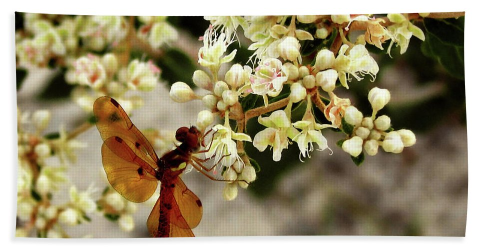 Nature Bath Sheet featuring the photograph Eastern Amberwing On Wild Buckwheat by Peg Urban