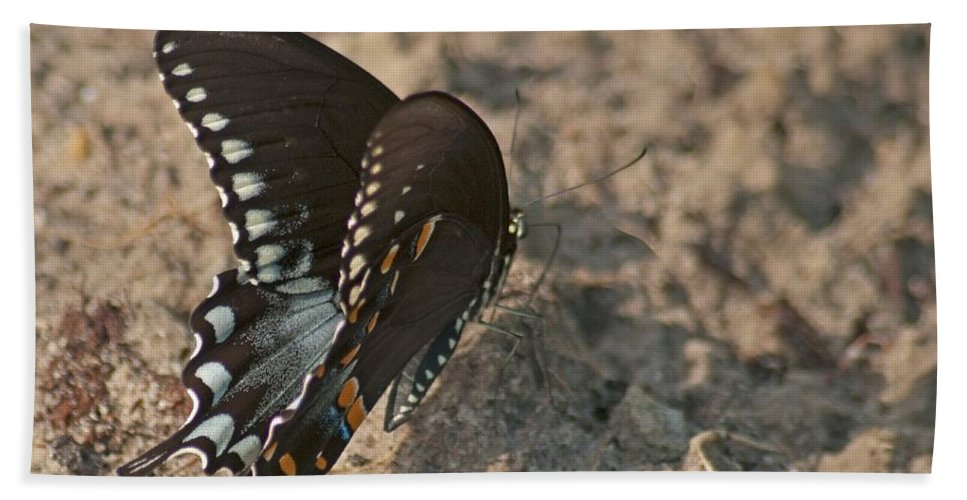 Adult Hand Towel featuring the photograph Eastern Tiger Swallowtail 8526 3205 by Michael Peychich