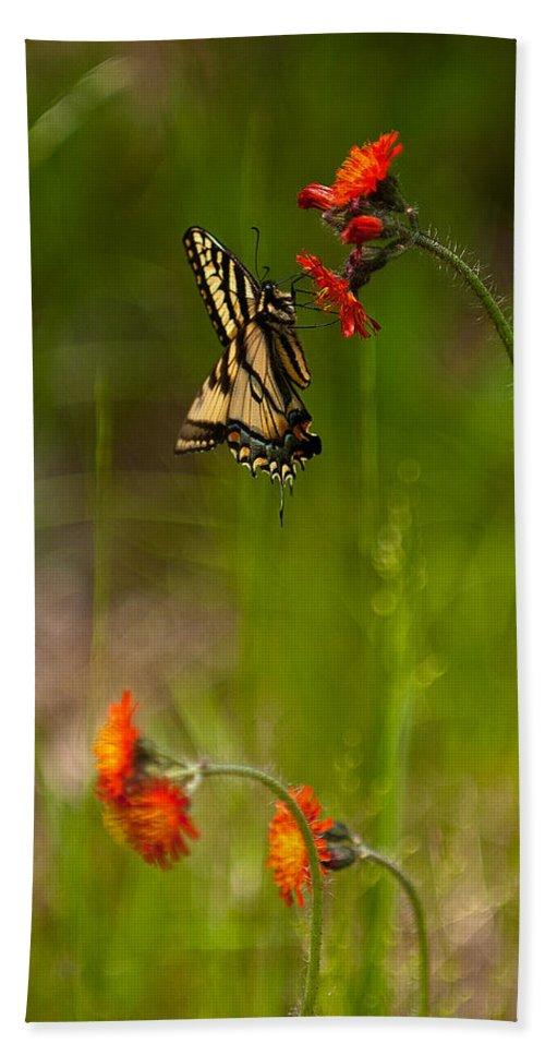 eastern Tiger Swallowtail Bath Sheet featuring the photograph Eastern Tiger Swallowtail Profile Shot by Paul Mangold