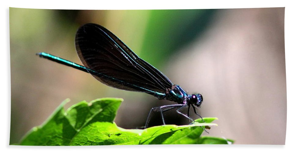 Ebony Jewelwing Bath Sheet featuring the photograph Ebony Jewelwing In The Spotlight by Travis Truelove