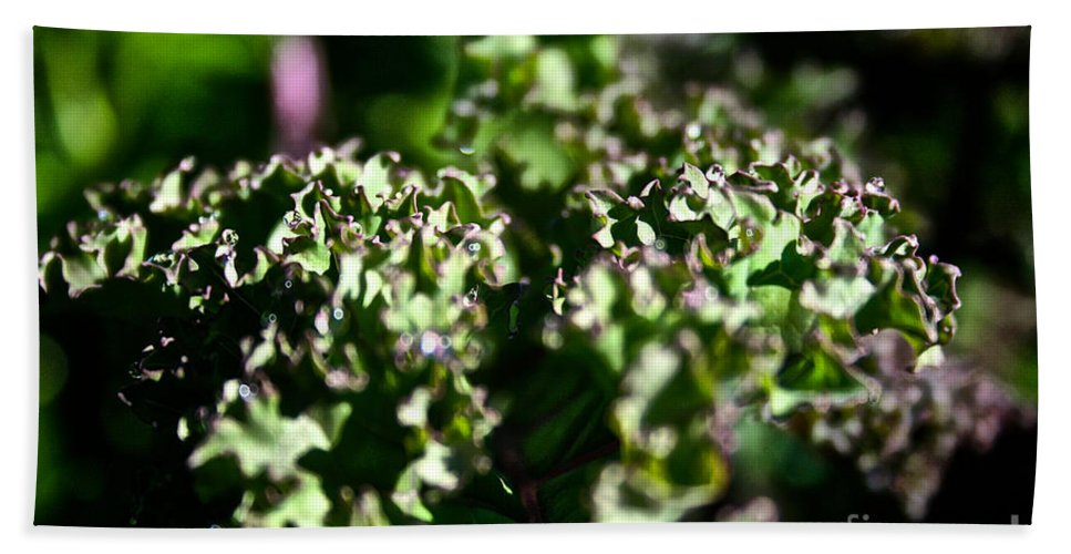 Outdoors Bath Sheet featuring the photograph Edge Of Kale by Susan Herber