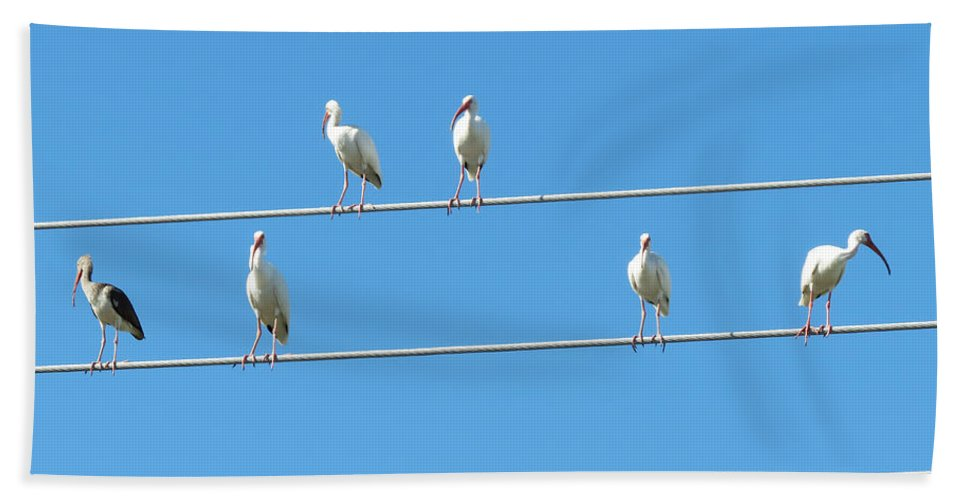 Florida Hand Towel featuring the photograph Egrets On A Wire by Chris Andruskiewicz