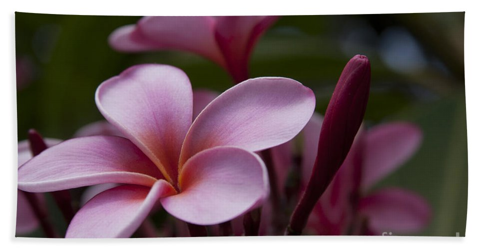 Aloha Bath Sheet featuring the photograph Eia Ku'u Lei Aloha Kula - Pua Melia - Pink Tropical Plumeria Maui Hawaii by Sharon Mau