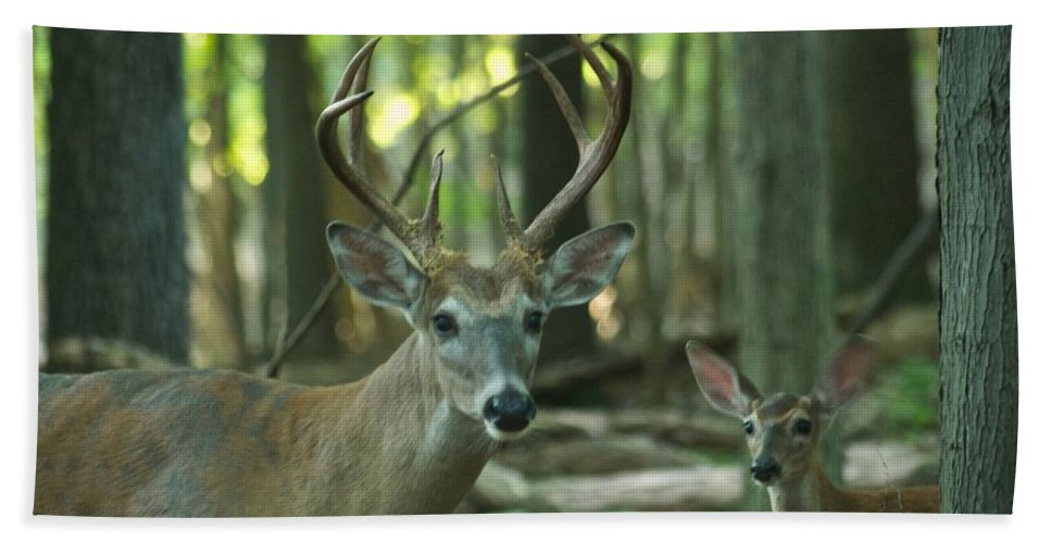 Animal Bath Sheet featuring the photograph Eight Point And Fawn_9532_4367 by Michael Peychich