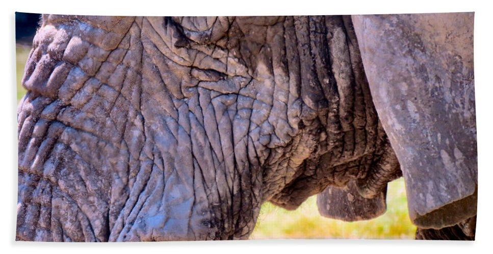 Elephant Bath Sheet featuring the photograph Elderly by Art Dingo