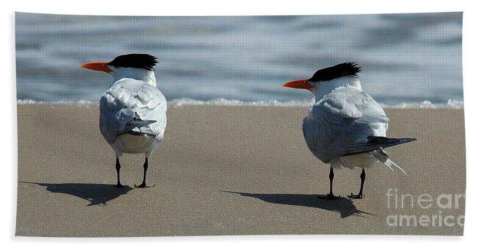 Elegant Tern Bath Sheet featuring the photograph Elegant Tern by Vivian Christopher