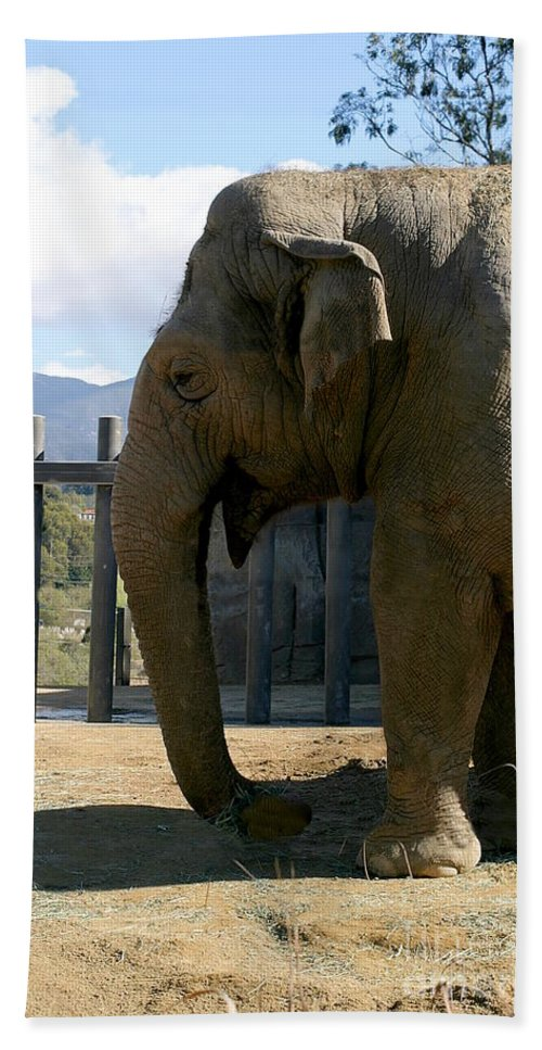 Trunk Bath Sheet featuring the photograph Elephant by Henrik Lehnerer