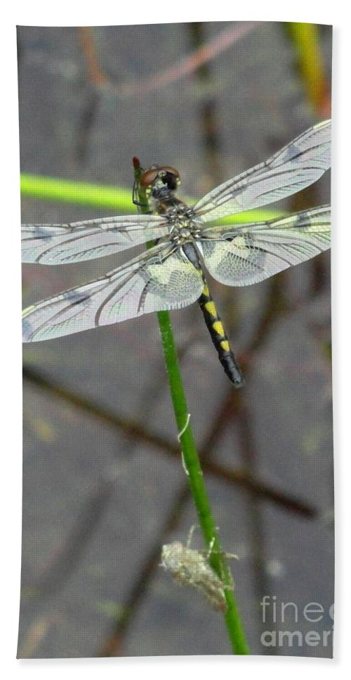 Dragonfly Bath Sheet featuring the photograph Emergance by Meandering Photography