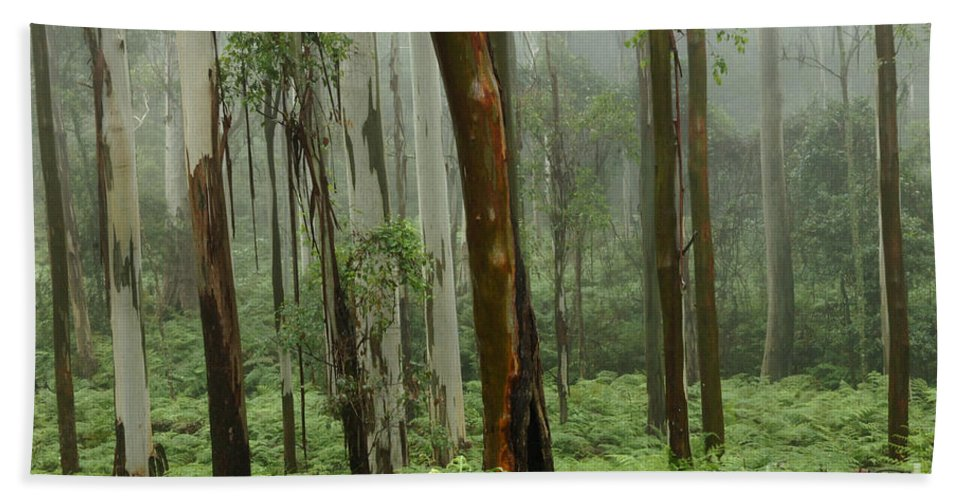 Forest Bath Sheet featuring the photograph Australia Enchanted Forest by Bob Christopher
