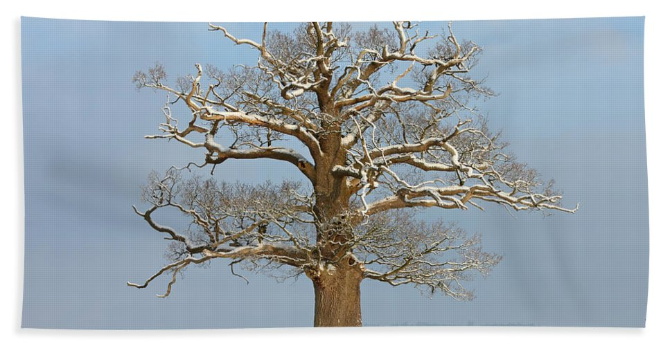 Nature Hand Towel featuring the photograph English Oak by Mark Taylor