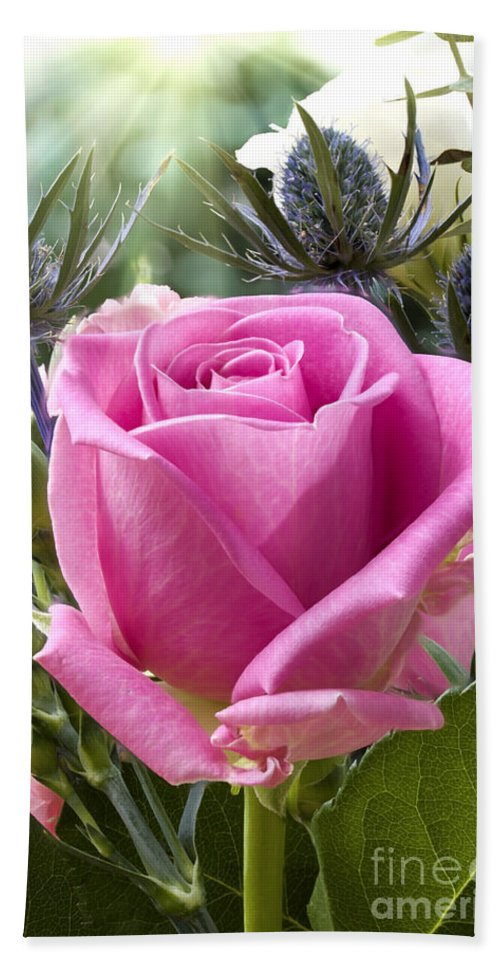 Flower Hand Towel featuring the photograph English Pink Rose Close Up by Simon Bratt Photography LRPS