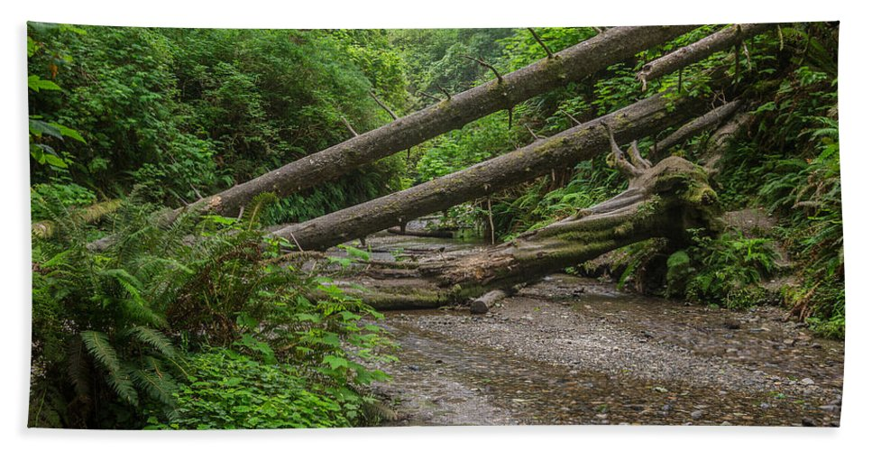 Fern Canyon Hand Towel featuring the photograph Entrance To Fern Canyon by Greg Nyquist