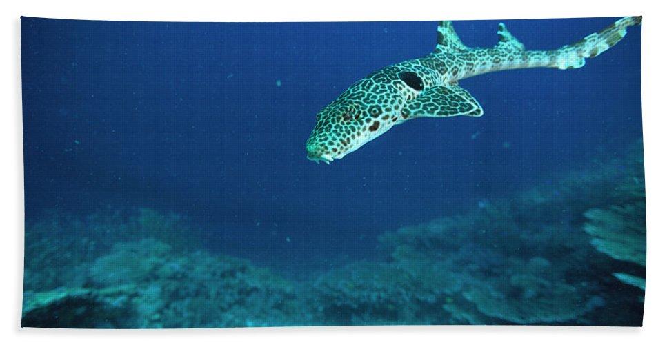 Mp Hand Towel featuring the photograph Epaulette Shark Hemiscyllium Ocellatum by Mike Parry