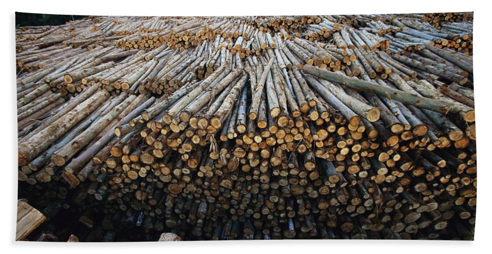Mp Hand Towel featuring the photograph Eucalyptus Stacked Lumber by Mark Moffett