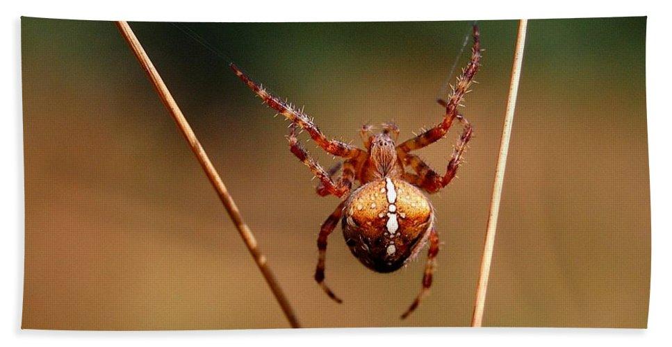 European Garden Spider Hand Towel featuring the photograph Hanging Tough by Gavin Macrae