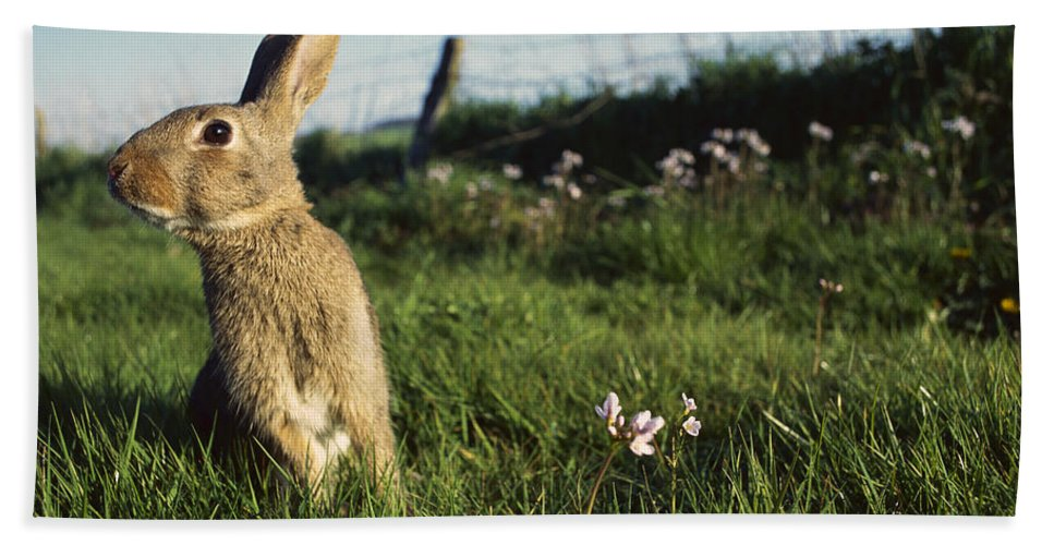 Mp Hand Towel featuring the photograph European Rabbit In A Meadow by Cyril Ruoso