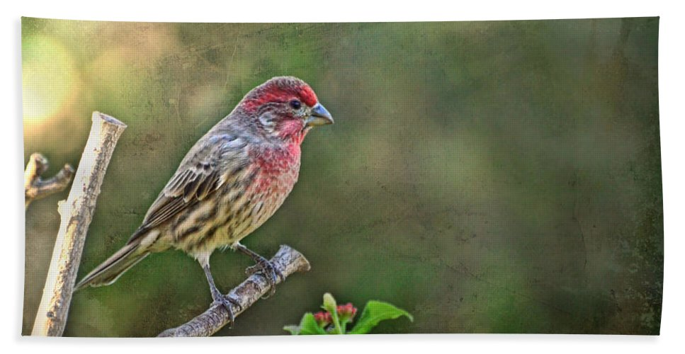 Nature Hand Towel featuring the photograph Evening Finch Blank Greeting Card by Debbie Portwood