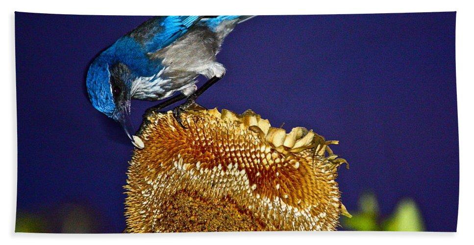 Birds Bath Sheet featuring the photograph Evening Snack by Diana Hatcher