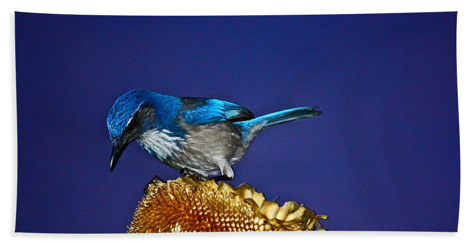 Birds Bath Sheet featuring the photograph Evening Visitor by Diana Hatcher