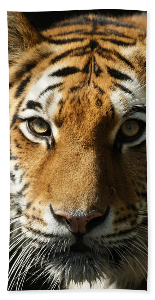 Tiger Hand Towel featuring the photograph Eye Contact by Ernie Echols