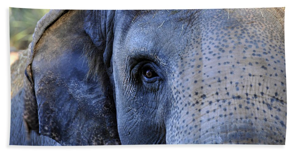 Fine Art Photography Bath Sheet featuring the photograph Eye Of The Elephant by David Lee Thompson