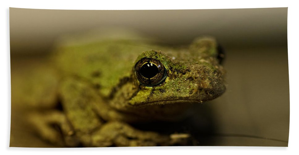 Frog Hand Towel featuring the photograph Eye To Eye by Sue Capuano