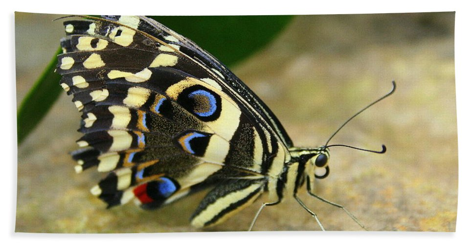Butterfly Bath Sheet featuring the photograph Eye To Eye With A Butterfly by Laurel Talabere
