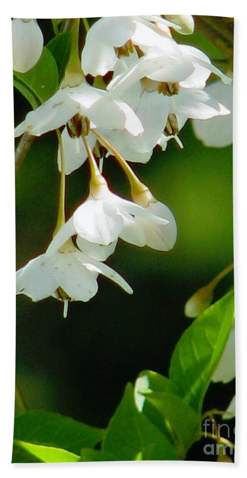 Flowers Bath Sheet featuring the photograph Faerie Bells 2 by Rory Sagner