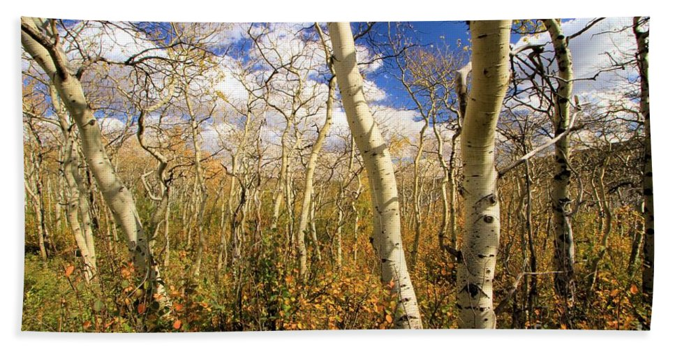 Aspen Trees Hand Towel featuring the photograph Fall Aspens by Adam Jewell