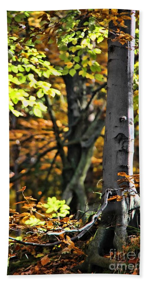 Fall Beauty Hand Towel featuring the photograph Fall Beauty by Mariola Bitner